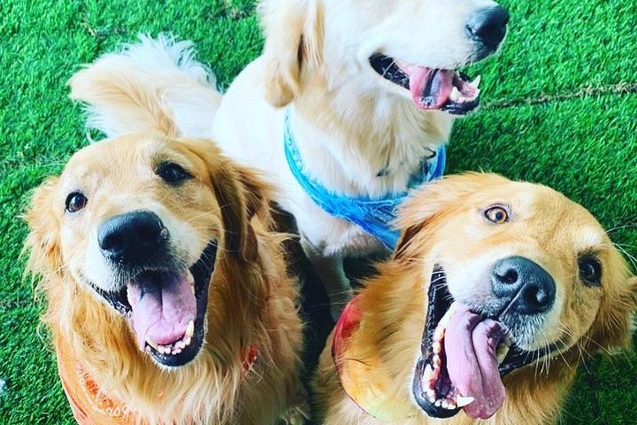 Pet Friendly Indoor Dog Park Happy Hour in Downtown West Palm Beach