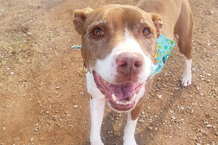 Pet Friendly Virtual Austin Pets Alive! Palentine's 5K