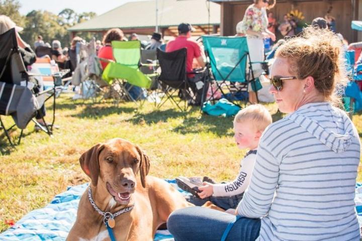 Pet Friendly Harvest Festival