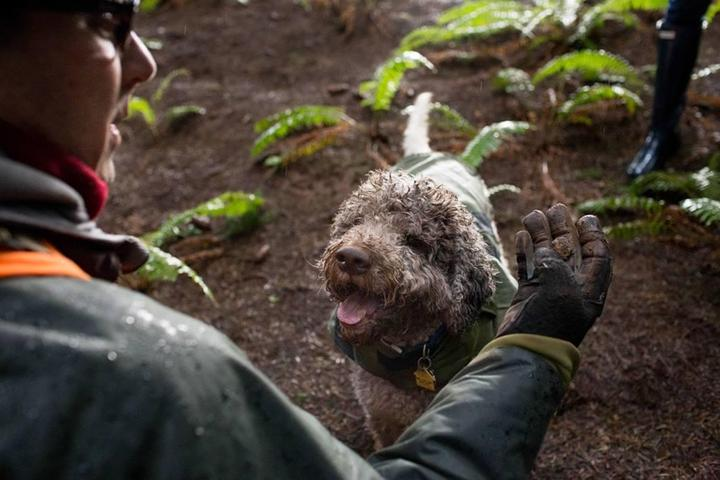 Pet Friendly Oregon Truffle Festival - The Joriad™ North American Truffle Dog Championship