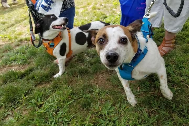 Dog Events In North Carolina