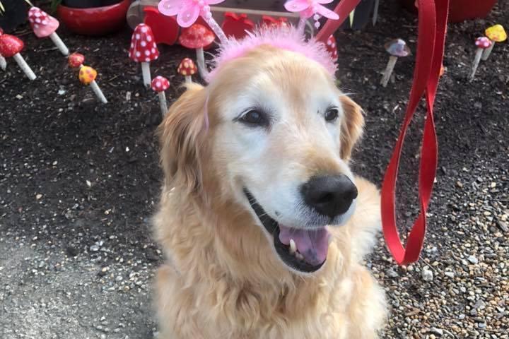 Pet Friendly Raymond's Garden Center & Landscaping