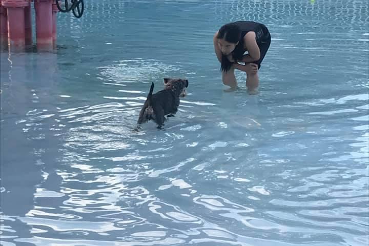 Pet Friendly Annual Doggie Swim Pool Paw-ty at the Glen Rock Pool