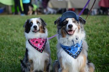Pet Friendly Eat & Play in Travis Park