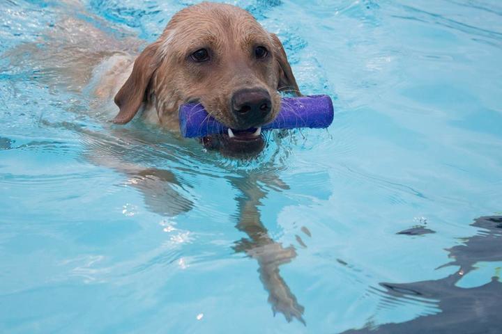 Dog Friendly North Carolina - Bring Fido