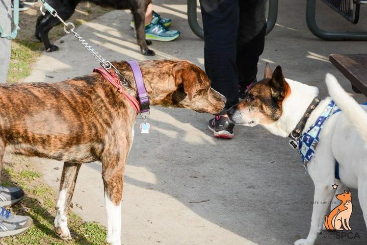 Pet Friendly VIRTUAL Annual Tail Chaser 5K and 1 Mile Walk