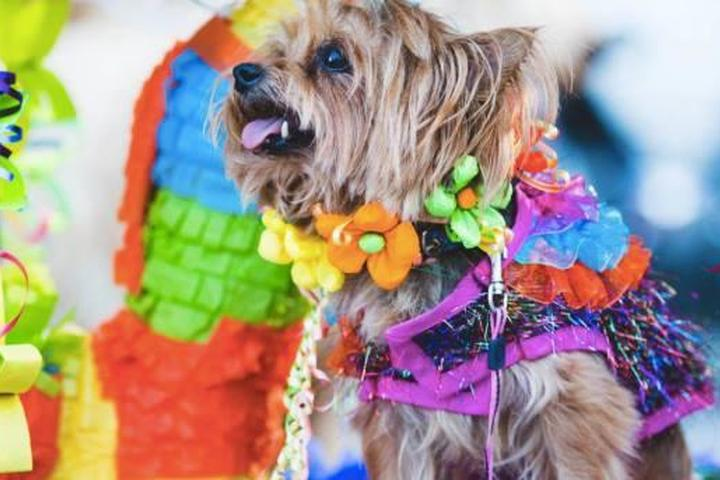 Pet Friendly Fiesta® Pooch Parade