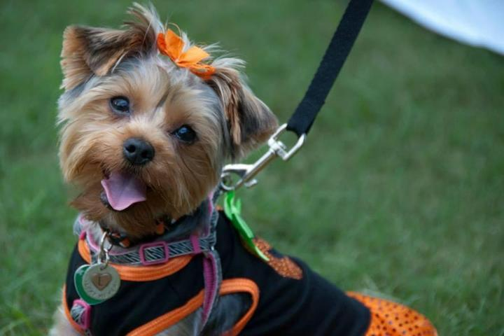 Pet Friendly Howl-O-Ween at Pinecrest Gardens