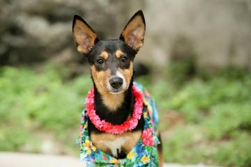 Pet Friendly PAWS Chicago Beach Party