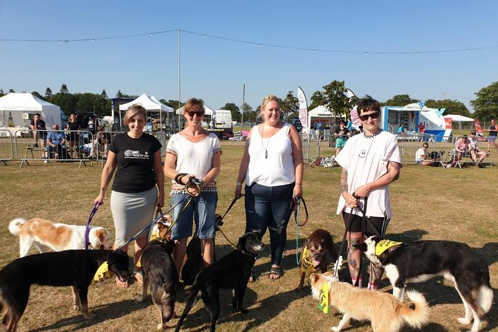 Pet Friendly All About Dogs Blenheim Palace - Paws at the Palace