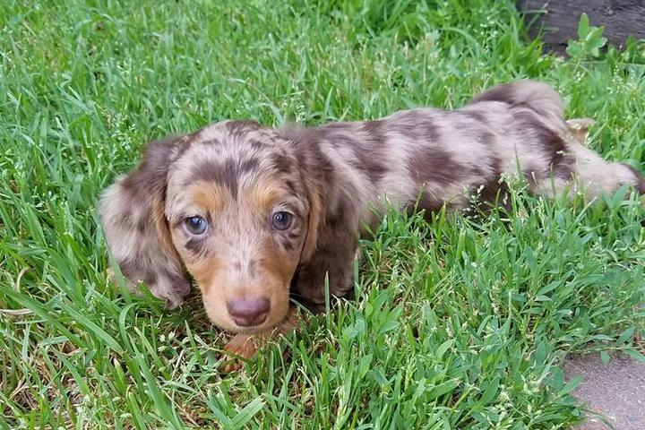 Pet Friendly Cape Cod Doxie Day