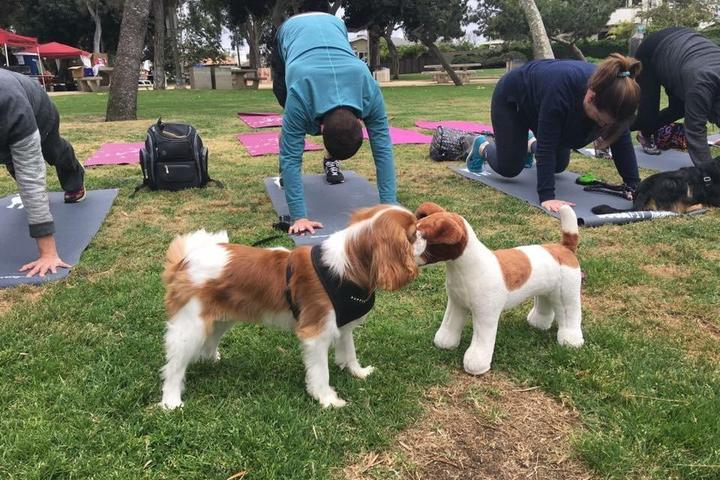 Pet Friendly 1st Annual PICC Pets in the Park presented by Nauti Dog