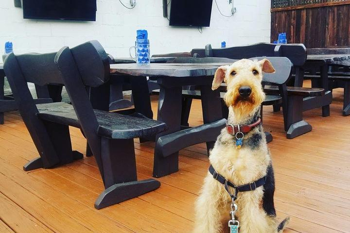 Pet Friendly Paws on the Patio
