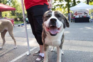 Pet Friendly Annual Open House: Pet Adoption & Family Fun Event