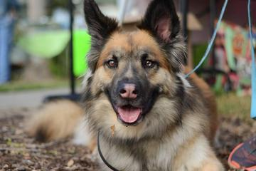 Pet Friendly Dog Lovers Festival
