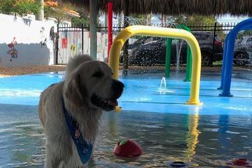 Pet Friendly Splashy Hour