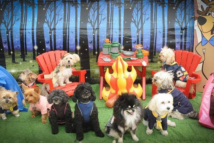 Dog Events in Staten Island, NY - Bring Fido