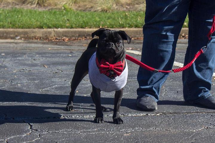 Dog Events in Georgia - Bring Fido