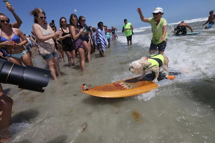 Pet Friendly Annual Easter Surf Contest featuring East Coast Dog Surfing Championship
