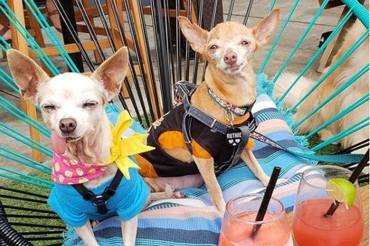 Pet Friendly Yappy Hour at Upstairs at Caroline