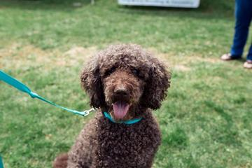 Pet Friendly Down on the Farm Weekend and Dog Show