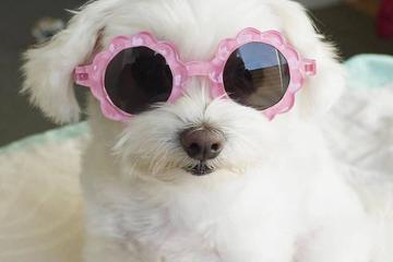 Pet Friendly BarkHappy Sacramento: Summer Pawty