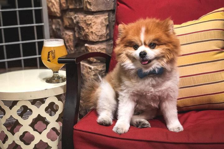 Pet Friendly Yappy Hour Pooch Patio Party at PLT in WBV