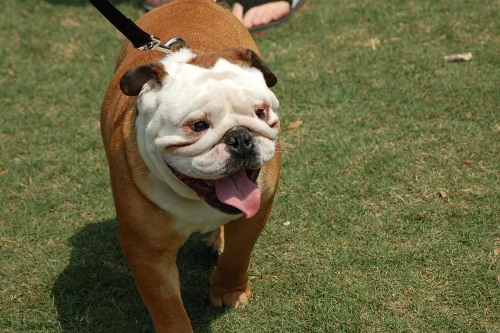 Pet Friendly Yappy Hour at Wannamaker County Park