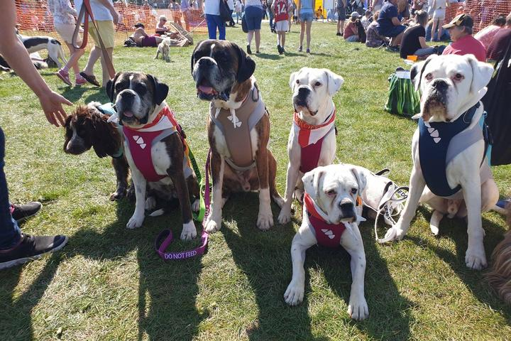 Pet Friendly All About Dogs Newark