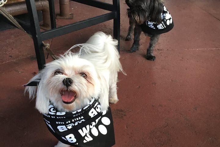 Pet Friendly Yappy Hour at World of Beer (SoHo Tampa)