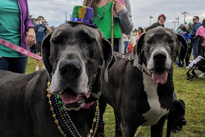 Pet Friendly Oak Island Mardi Gras by the Sea Festival