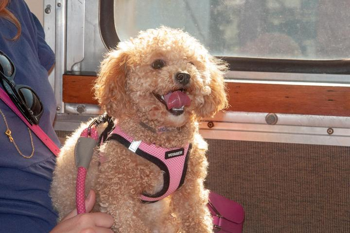 Pet Friendly Tails on the Rails at the B&O Railroad Museum