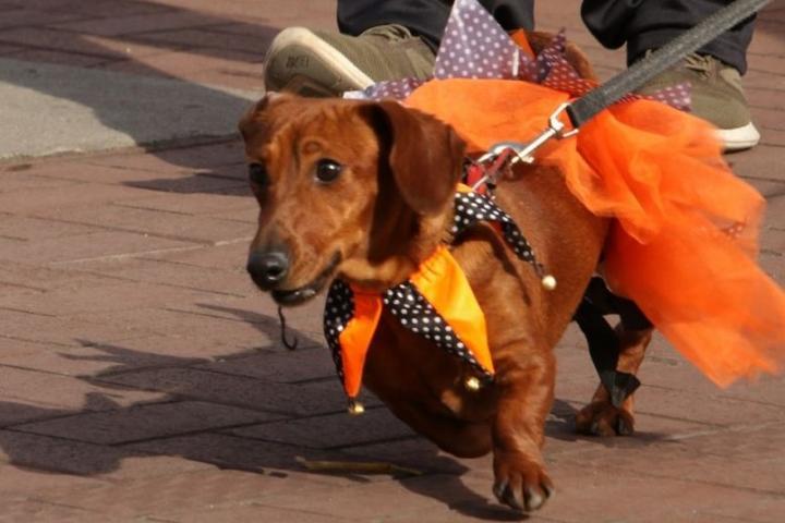 Pet Friendly Circleville Pumpkin Show