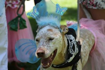 Pet Friendly Hops & Harley Festival