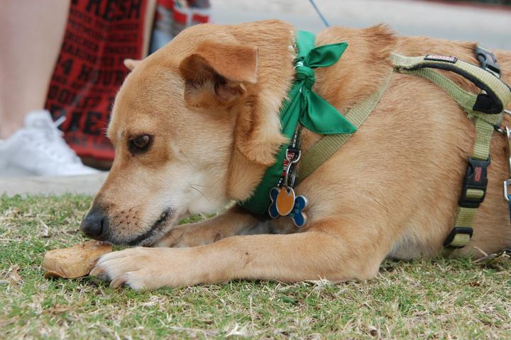 Pet Friendly Mighty Texas Dog Walk