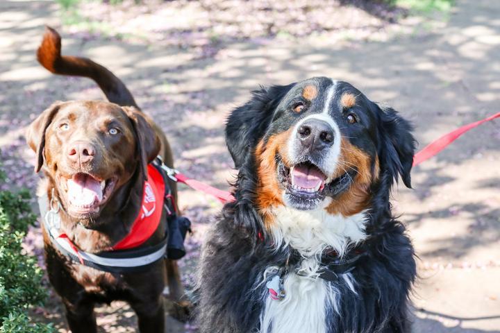 Pet Friendly Bark For Life of Hershey Harrisburg Area