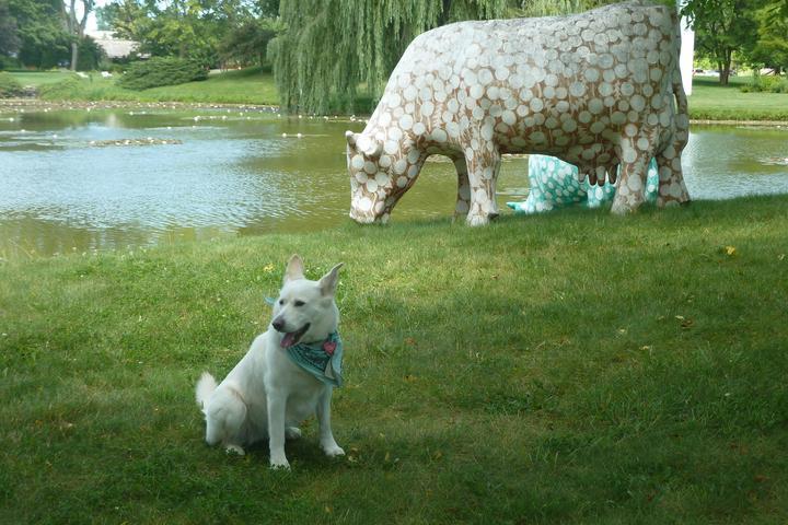 Pet Friendly Dog Days at Lynden Sculpture Garden