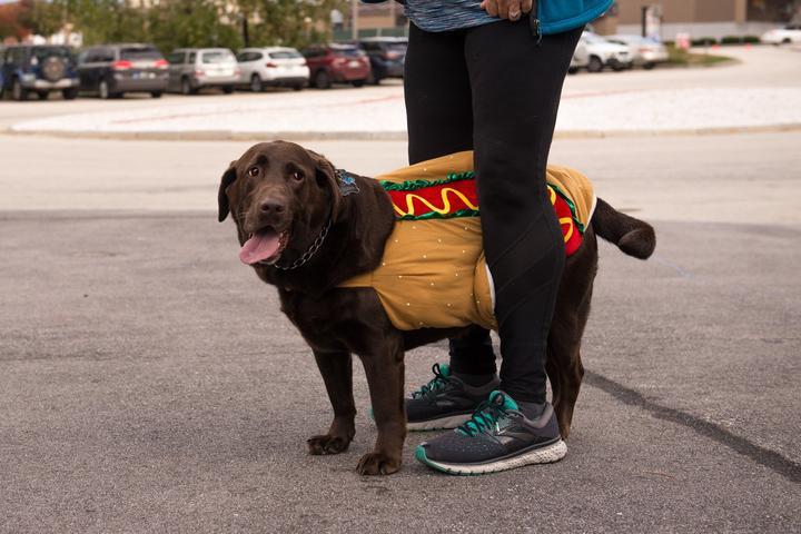 Pet Friendly Howl-O-Ween 5K Run/Walk