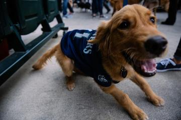 Pet Friendly Bark at the Park