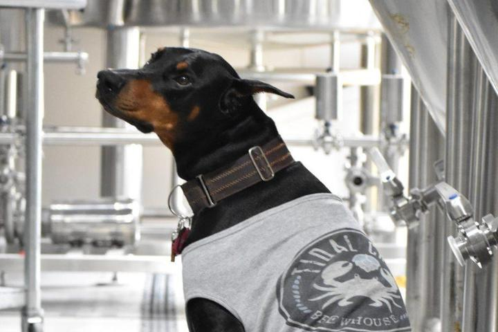 Pet Friendly Yappy Hour at Tidal Creek Brewhouse
