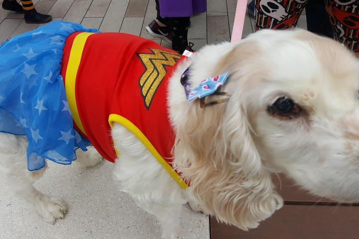 Pet Friendly Halloween Pet Costume Parade at The Promenade Bolingbrook