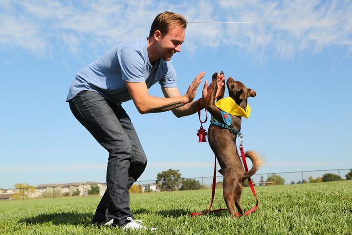 Pet Friendly DogFest Alabama