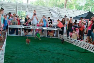 Pet Friendly Georgia Dachshund Races