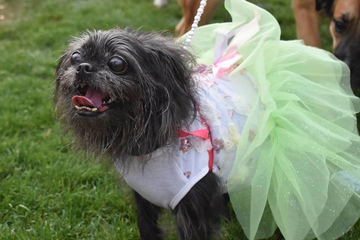 Pet Friendly Doggie EGGstravaganza
