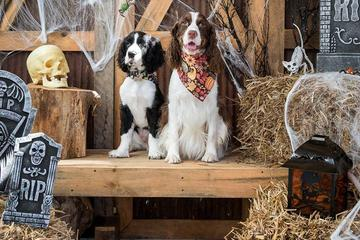Pet Friendly Annual Spooktacular Fundraising Event