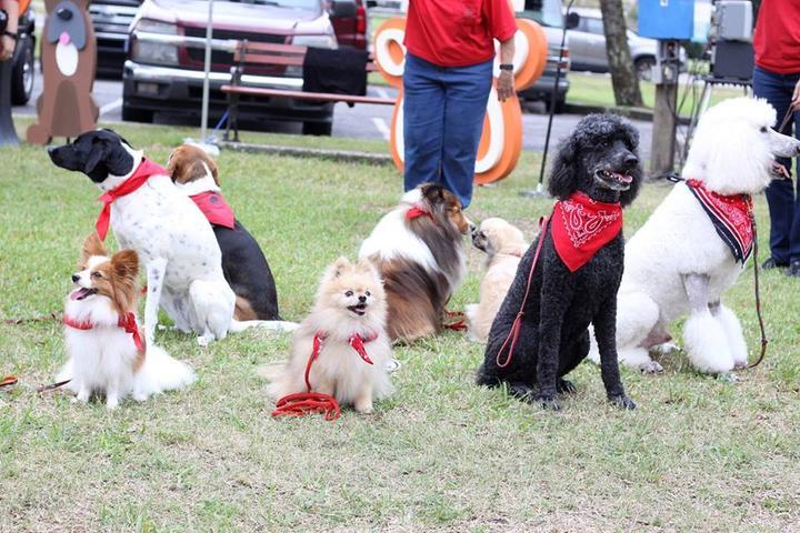 Dog Friendly Pensacola, FL - Bring Fido