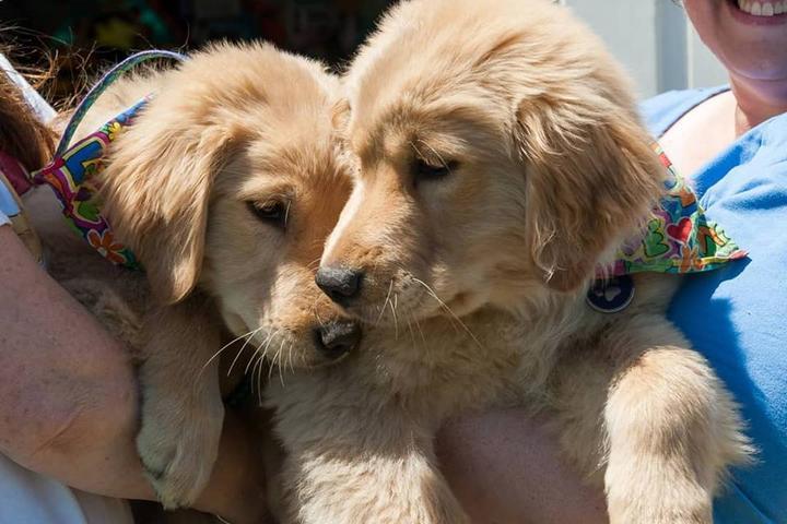 Pet Friendly New England Golden Jubilee