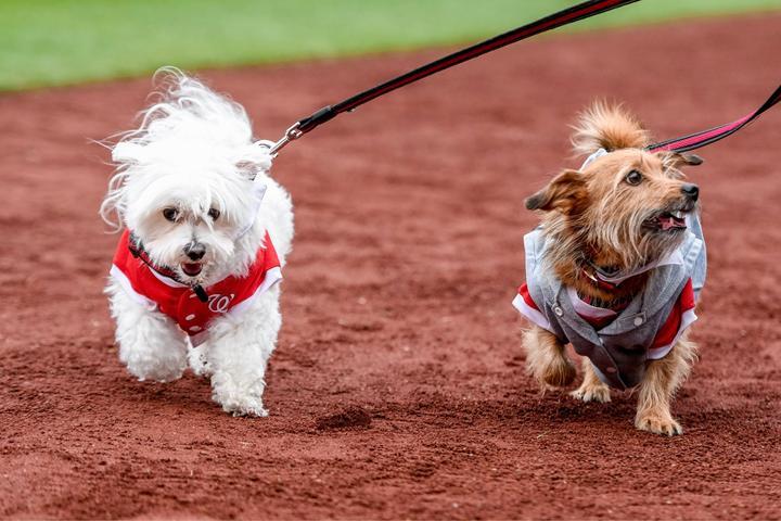 Dog Events in Fairfax, VA - Bring Fido