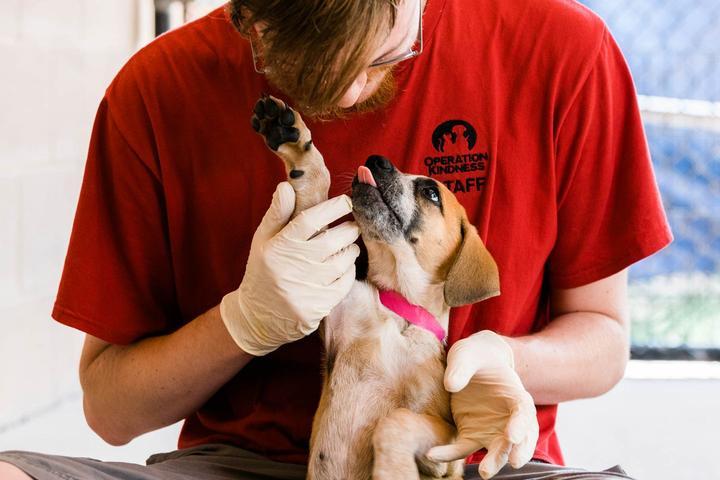 Pet Friendly Operation Kindness Hosts Hope Gala Silent Auction & Raffle