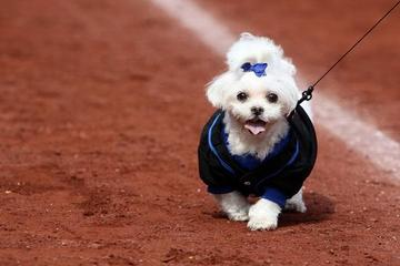 Pet Friendly Dog Day at the Rays